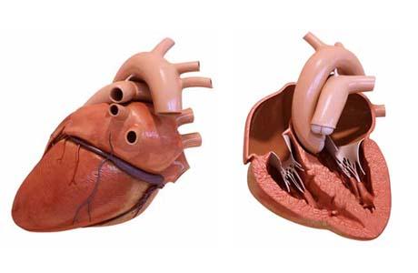 3dprinted_heart
