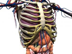 upper body2